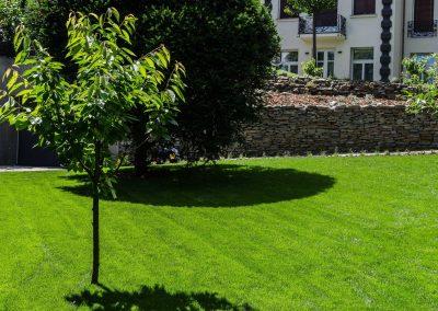 Szoliter díszfák a kertben